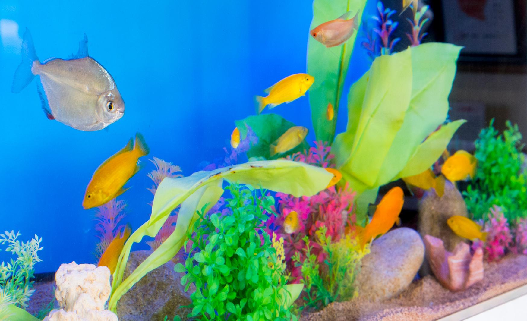 観賞魚システム